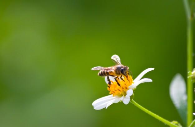 As abelhas são insetos que trazem grande benefício para nossa saúde