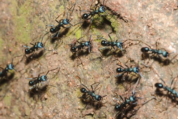 Dedetizadora em São Paulo. Como acabar com as formigas?