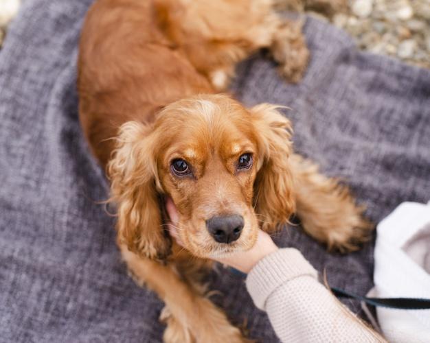 Saiba o que carrapatos podem fazer com seus animais de estimação