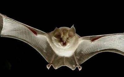 5 Motivos para Realizar o Manejo de Morcegos em Áreas Urbanas
