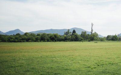 Controle de Pragas em Galpões e Terrenos: Quais as pragas mais encontradas nesses locais?