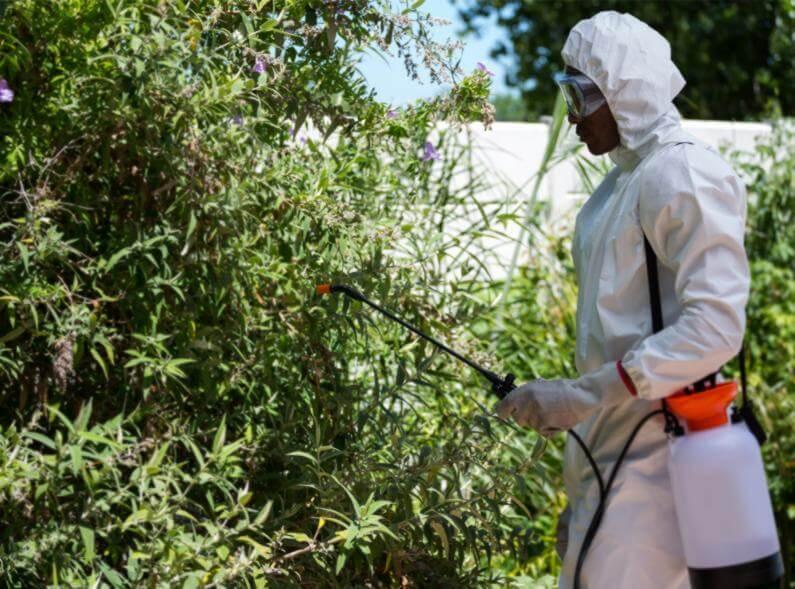 Manejo Integrado de Pragas: a melhor escolha para um controle de pragas eficiente