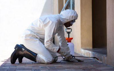 Mantenha o controle de pragas mesmo com a pandemia: conheça as vantagens