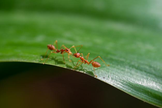 Serviço de Dedetização de Formigas em Natal