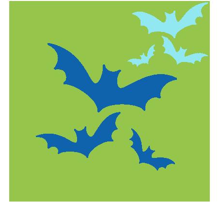 Morcegos curtem solidão