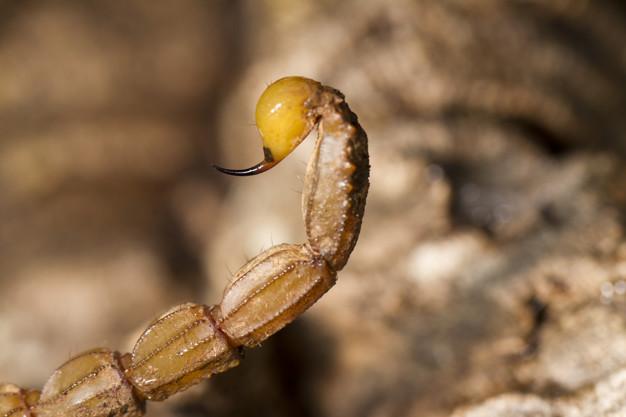 Dedetização de Escorpiões - Dedetizadora