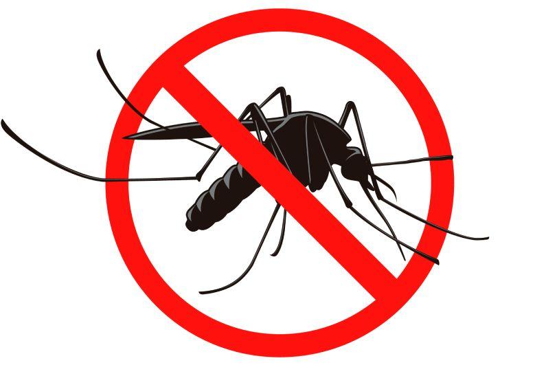 Dedetizadora em BH: conheça os serviços de controle de praga disponíveis para sua segurança