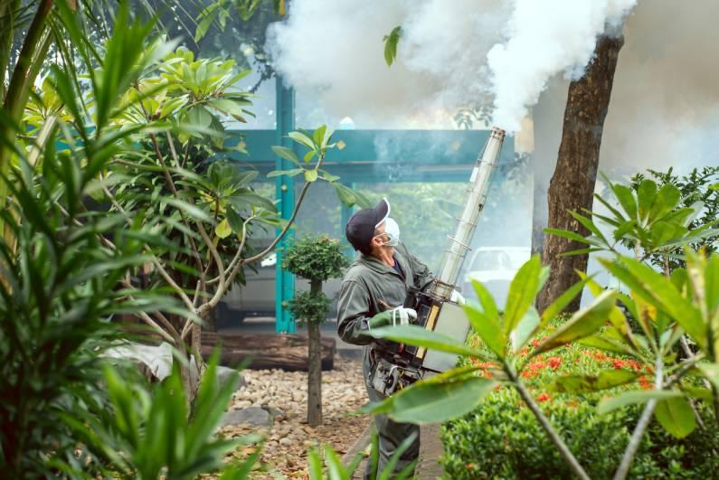 Como escolher uma dedetizadora para o controle de mosquitos?