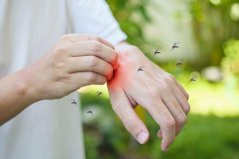 Controle do Mosquito Aedes aegypti: não dê espaço para a Dengue!