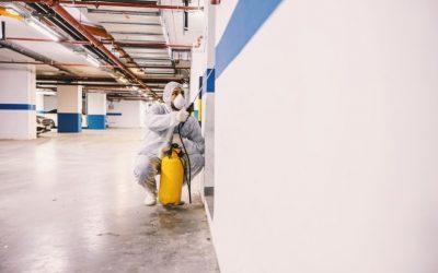 Dedetizadora em Recife: métodos para o controle de pragas