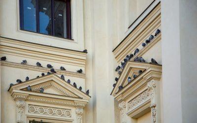 Dedetizadora em São Paulo: como é feito o controle de pombos?